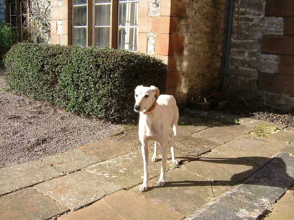 Photo: dogs are welcome at Morland House